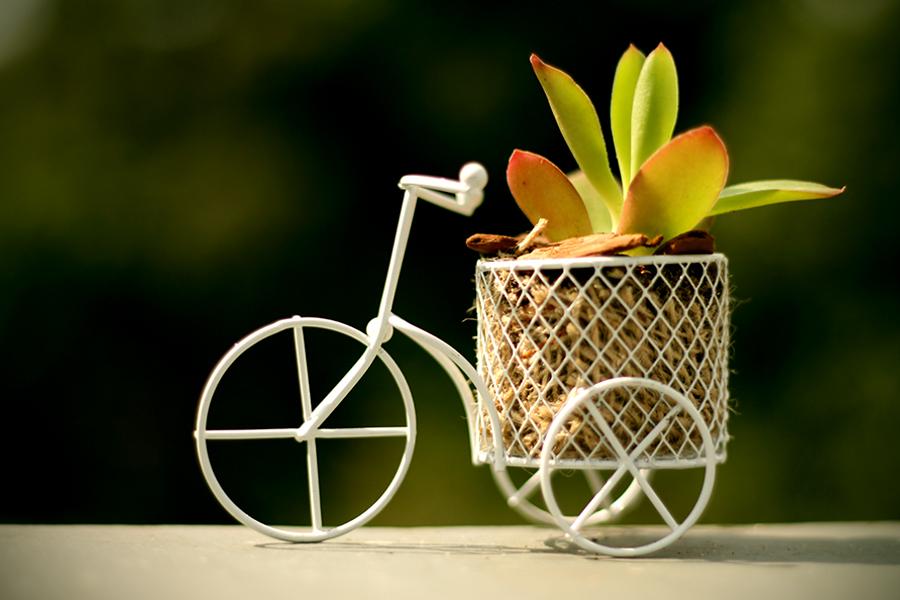 ideias sustentaveis jardim:Ideias sustentáveis para o jardim – Paisarti