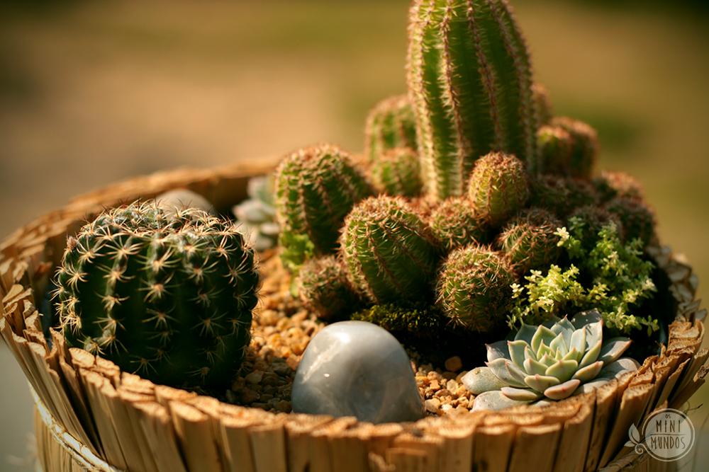 mini jardim de cactus:Cactus Mundi