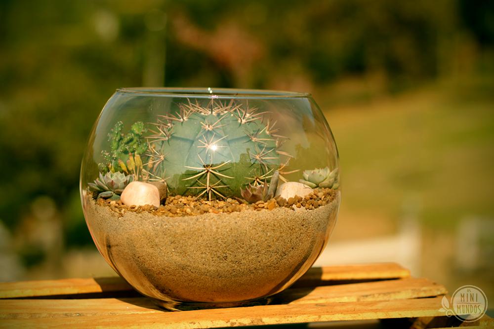 mini jardim de vidro:Terrário em vaso de vidro formato aquário com cacto Coroa de Frade e