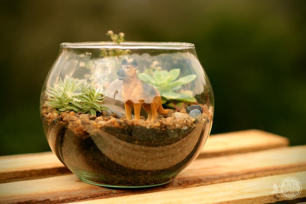 mini jardim de vidro:Mini Jardim De Suculentas
