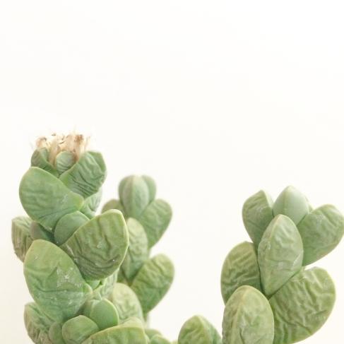 Overwatering-Succulents